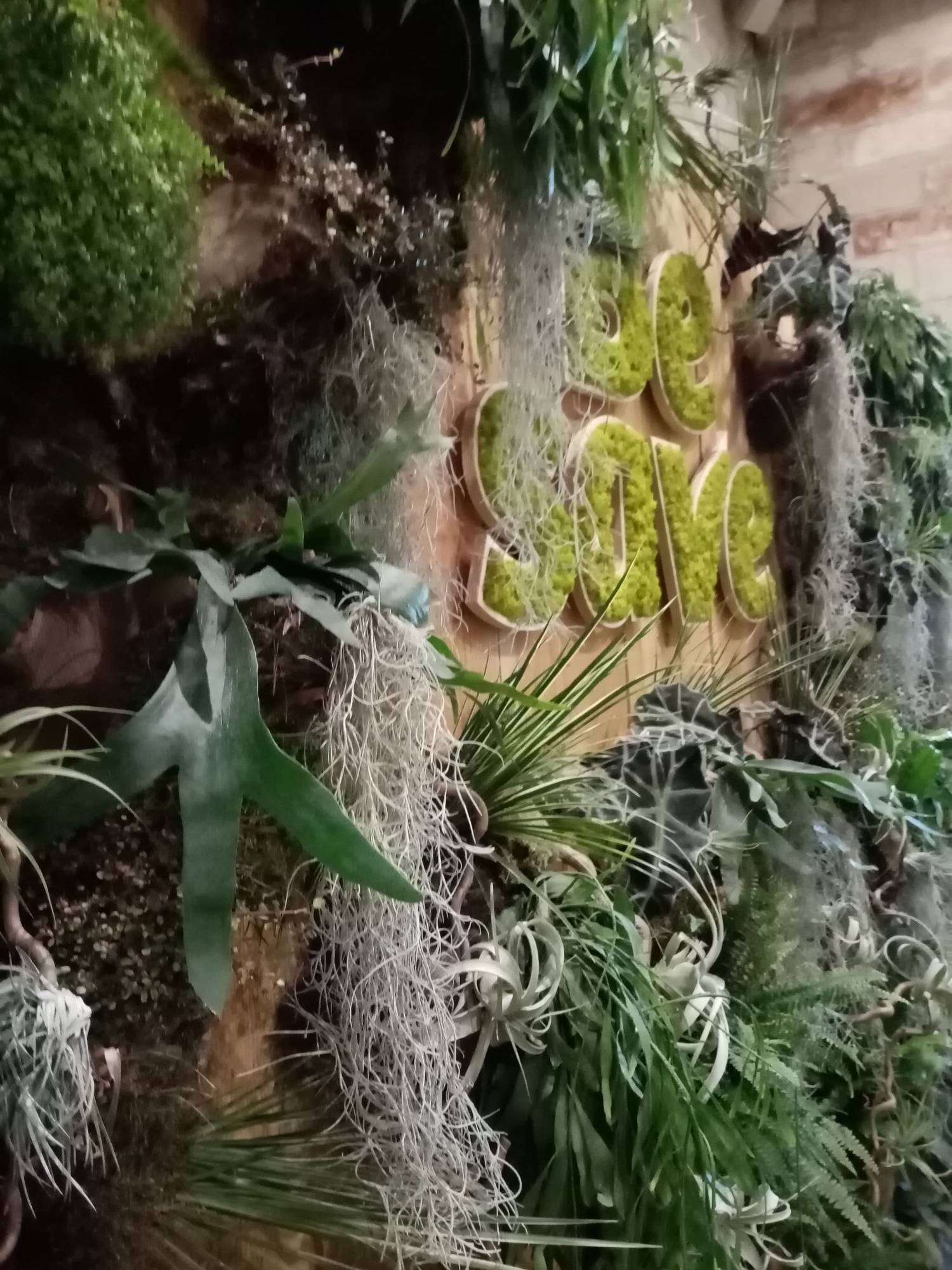 Plantes Pour Mur Végétal Extérieur mur de plantes naturelles de feuillages et de verdure pour