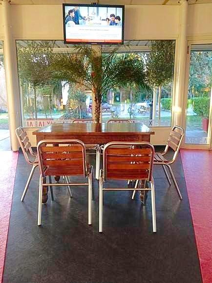 """Une belle harmonie du palmier """"Roebelinii"""" avec deux oliviers sur la terrasse extérieure."""