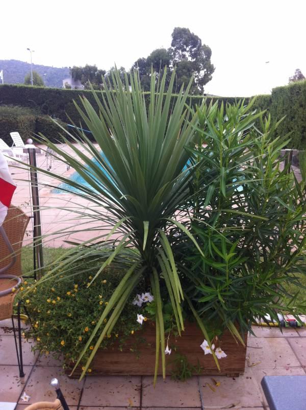 location de courte et longue dur e de plantes en bacs jardini res pour terrasse de restaurant. Black Bedroom Furniture Sets. Home Design Ideas