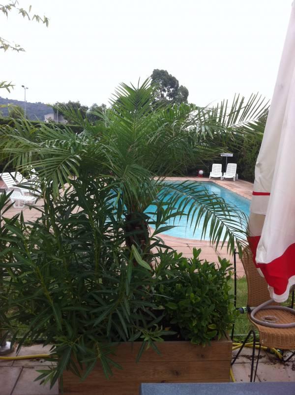 Location de courte et longue dur e de plantes en bacs - Contrat location meuble courte duree ...