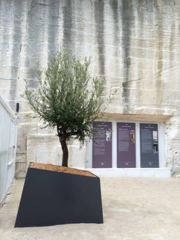 olivier en pot location et vente pour vos v nements d coration florale avignon paca clorofil. Black Bedroom Furniture Sets. Home Design Ideas