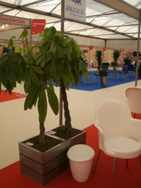 location de plantes et bacs d coratifs pour v nements salon stand exposition aix en provence. Black Bedroom Furniture Sets. Home Design Ideas