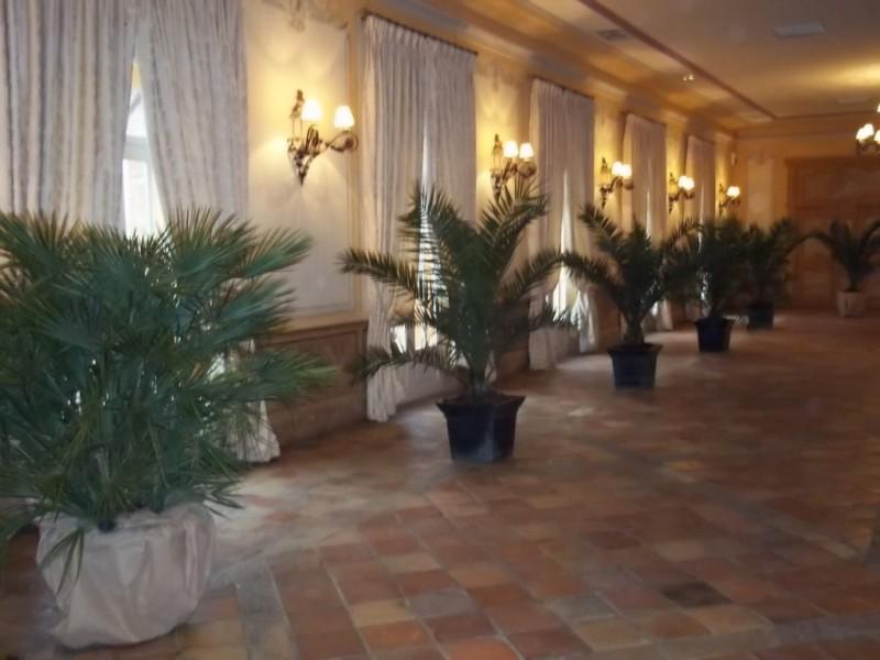Préférence location de plantes et bacs décoratifs pour salle de réception  IZ47