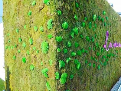 sur le mur végétal, les mousses boules naturalisées structurent et dessinent un élan sur la surface
