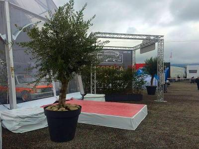 olivier et grosse plante en location pour podium
