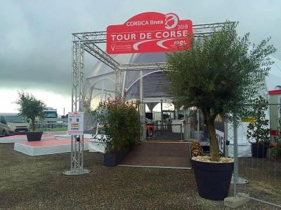 grosse plante en location pour décoration de tente et chapiteau