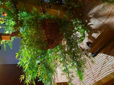 Location de plantes vertes pour vos evenements