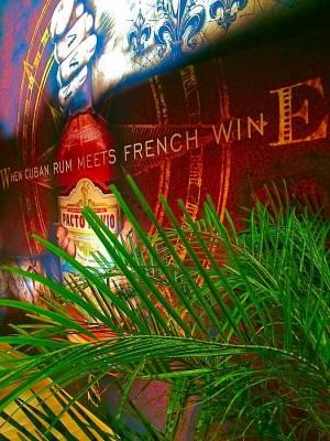 location de palmier pour salon dans le Var