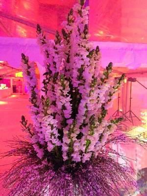 Explosion de mufliers blancs pour vos décorations de salles de réception et de mariage.