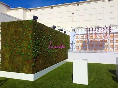 les mousses boules donnent du caractère et du relief au mur de végétaux mousseux