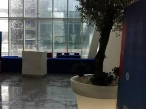 location olivier en pot pour événement Marseille Toulon