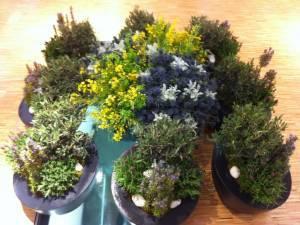 création végétale et florale à la location Avignon