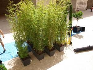 location de plantes en pots clauses générales et règlement saison 2018