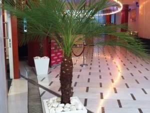 phoenix en location avec pots décoratifs Marseille Aix en Provence