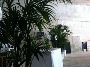Location de plantes : oliviers, buis, laurier, cyprès, palmiers avec pots décoratifs.