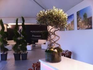 Location de plantes de style provençale et aromates pour lancement et pose de première pierre Marseille, Provence