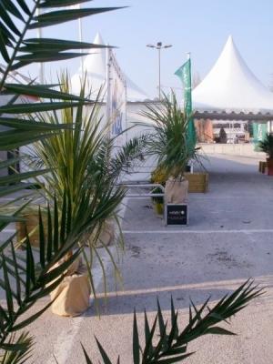 Location de palmiers.
